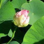 Vedanta-Gardens-0580